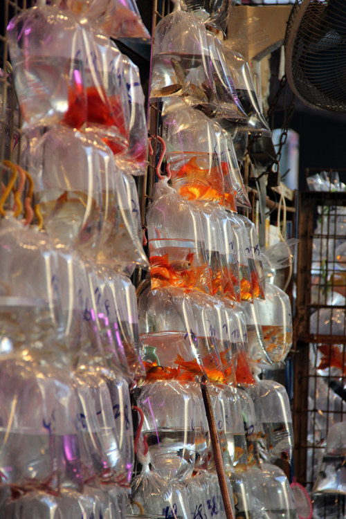 1701_hongkong_market_01