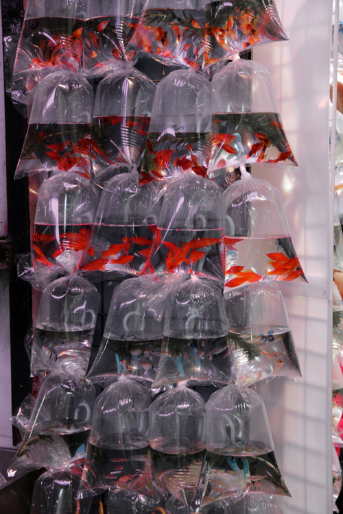 1701_hongkong_market_02