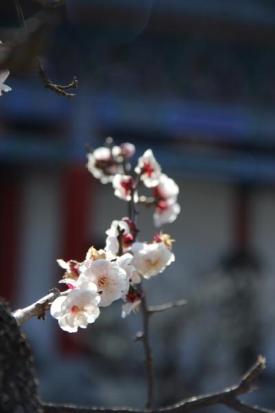 1702_lijiang_09
